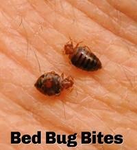 Cómo Prevenir las chinches en la cama