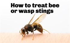Prevención y eliminación de avispas